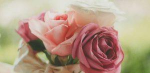 ורד ורוד עתיק