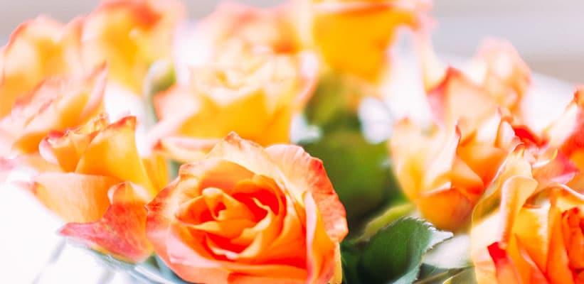 ורדים כתומים