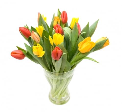 מנוי פרחים קבוע