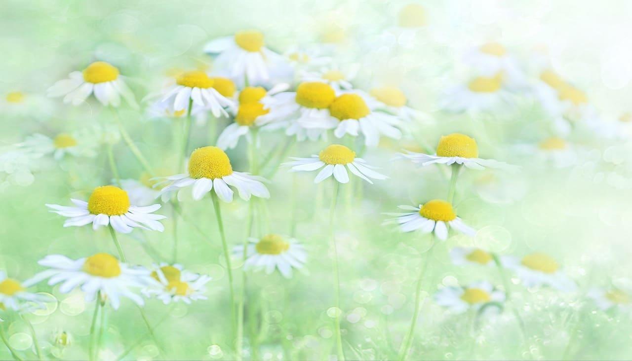 פרחים למרפסת שמש