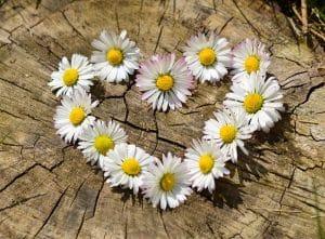 סידור פרחים לבנים