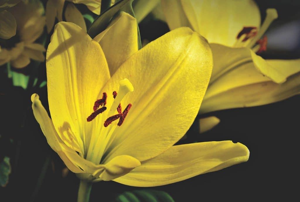 סידור פרחים צהובים