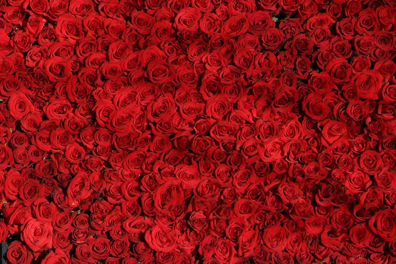 סידור פרחים אדומים