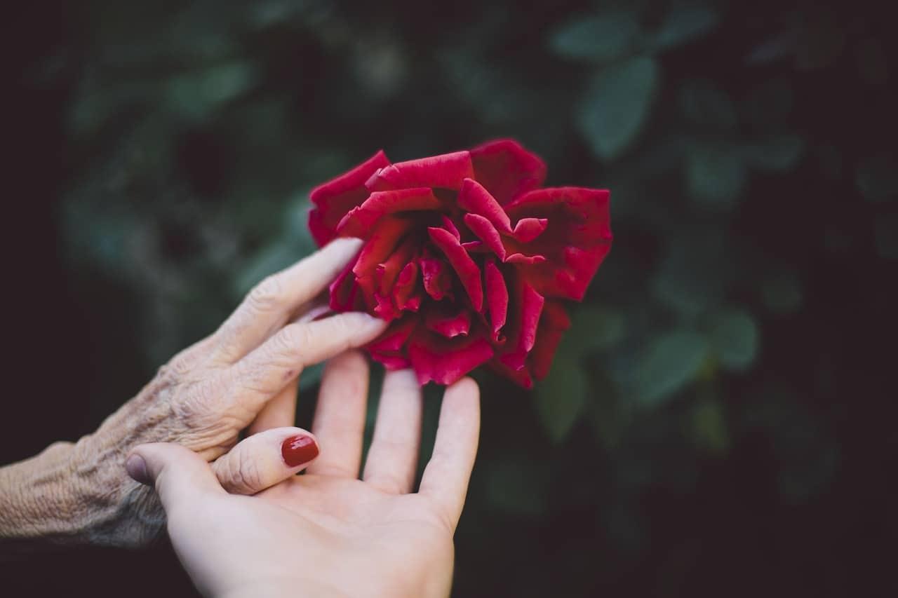 משלוח פרחים לבתי אבות להורים ולסבים שלנו