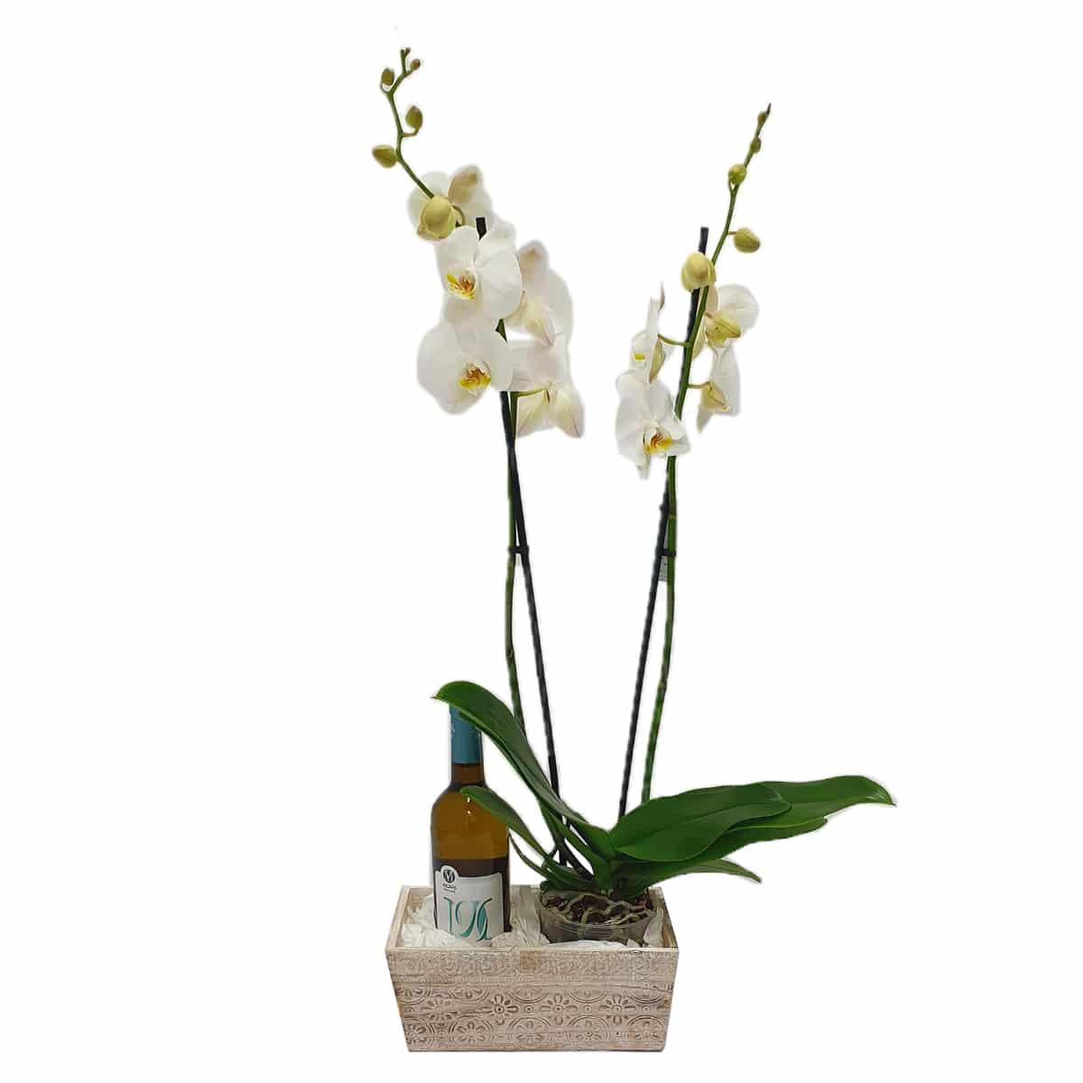 מארז סחלב ויין - משלוחי פרחים בראשון לציון